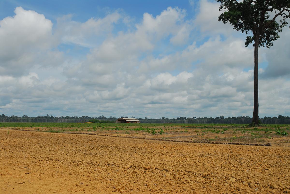 Desmatamento ex DSC 9606 Mauricio