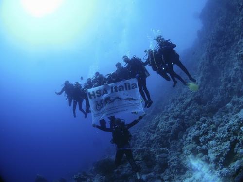 Tuffiamoci alla scoperta dei fondali marini della Gallinara.