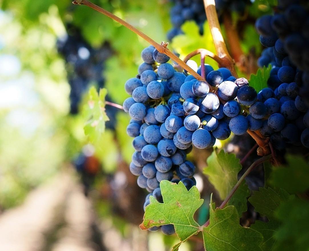 Rassegna degustazione nazionale vini biologici e biodinamici 2016 di Legambiente