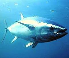 La diminuzione di pesce ed altri organismi marini e le problematiche legate alla salute
