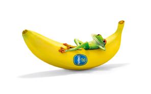 chiquita_banana_frog_2_by_greedyandy