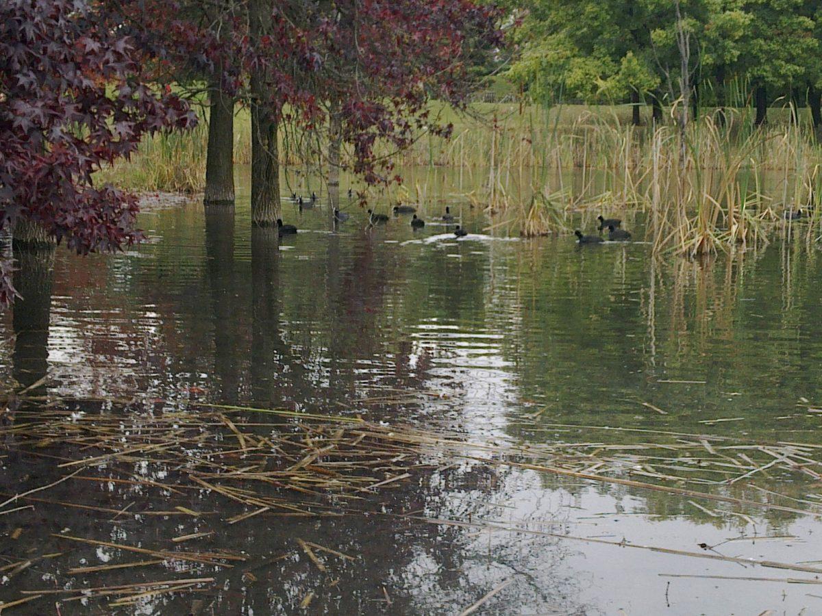 """""""I fiumi si raccontano""""…all'Ecomuseo Urbano"""