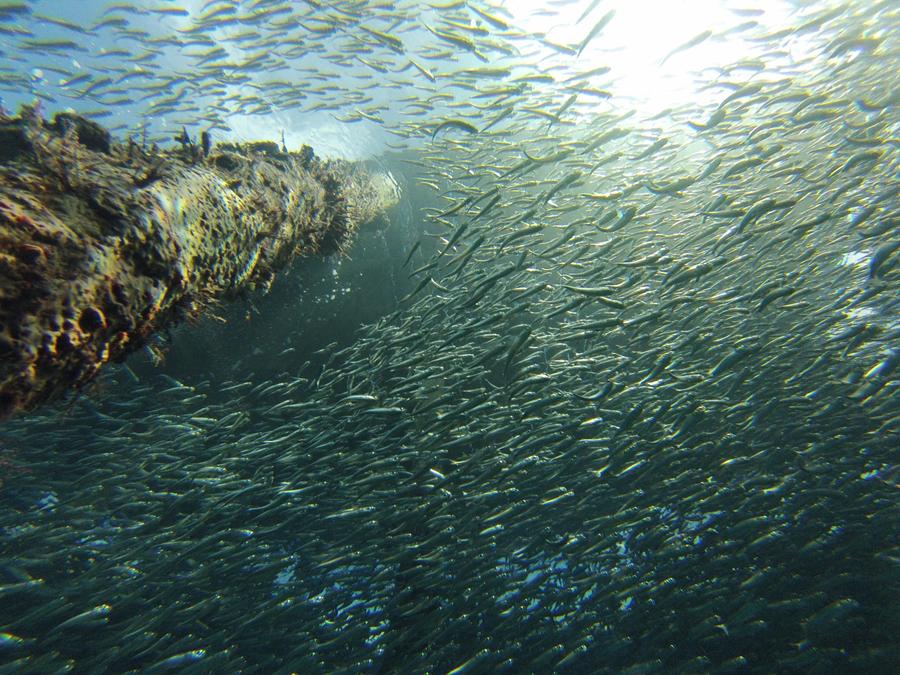 Insieme possiamo proteggere l'oceano